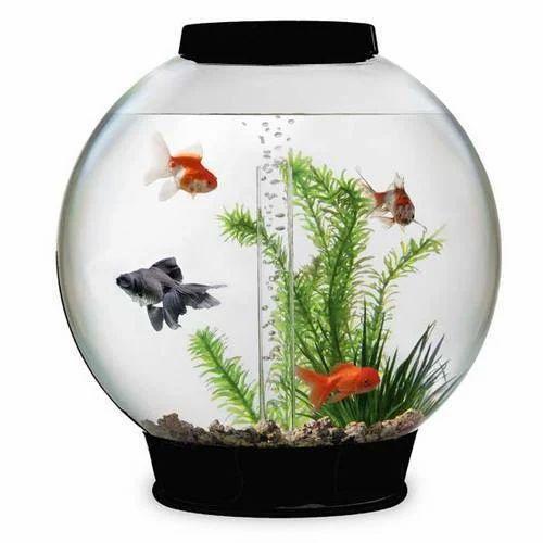 Bowl Fish Tank Size 8 9 X 8 9 X 4 7 Inches Rs 500 Piece Dolphin City Aquarium Care Id 19839938730