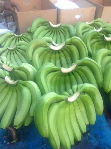 Cavendish Banana Export Quality