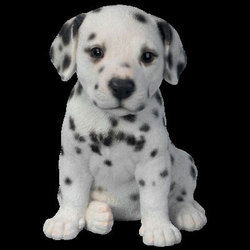 Newborn Dalmatian Puppies For Sale