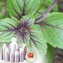 Anethole 99.5% Plus (EX-Basil Oil)