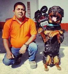 Dog Training with Hostel