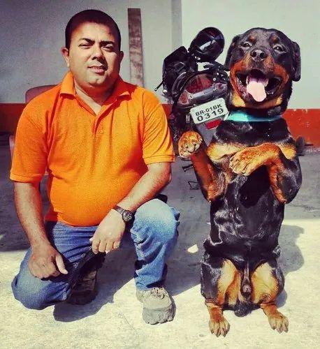 Beagle Puppy Price In Patna