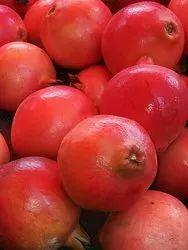 Bhagwa Pomegranate Plant