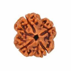 Brown 3 Mukhi Rudraksha Bead, Size: Standard