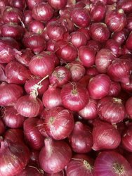 Dry Onion, Gunny Bag, Packaging Size: 50 Kg