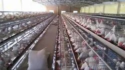 Egg Laying Poultry cage
