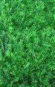 Green Pe Greenwall - Auspicious Grass Ag - 37, Size: 60 * 40 Cm