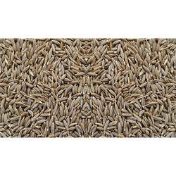 Masala Seed