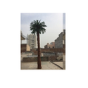 Artificial Palm Tree - Artificial 20  feet