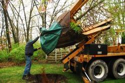 To Be Discussed Tree Transplanting Services, For Manual, Delhi Ncr