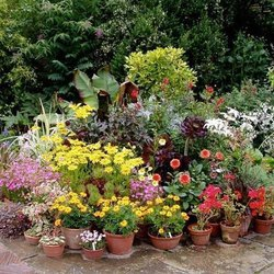 Decorative Gardening Plants