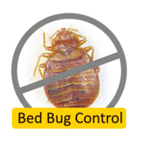 Bed Bug Control Service Bed Bugs Control In Kalyan City Thane