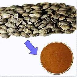Lajjalu Extract, 50 G To 5 Kg