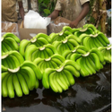 Green Banana, Packaging Size: 5 Kg