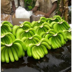 Green Banana, Packaging Size: 5 kg