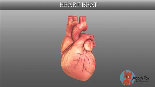 3D Medical Animation Services