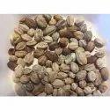 Melia Azedarach Seed