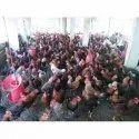 乡村鸡,每年200只以上,4个月