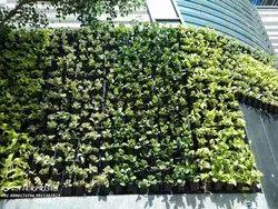Vertical Garden Without Irrigation