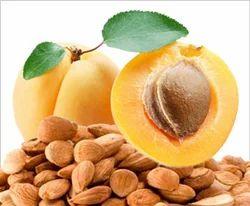 Bitter Apricot Kernels, Packaging Type: Vacuum Bag, Packing Size: 25 Kg Bag