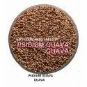 Red Amrud Seed