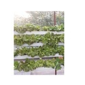 90 Plants Hydroponics System