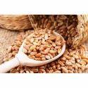 Sehore Wheat Grains