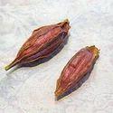 Jasminum Sambac Oil