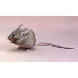 Rodent Control Service Provider