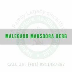 Malegaon Mansoora Herb