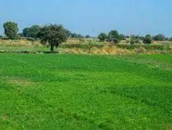 Commercial Land Near Sanganer Jaipur