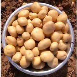 Expose A Grade Fresh Potato, Gunny Bag, 50Kg
