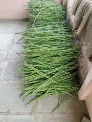 A Grade Green Moringa Drumstick, Bag