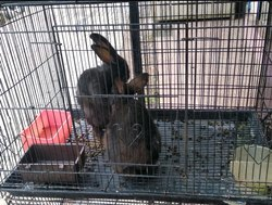 Breed Rabbits in Bengaluru - Latest Price & Mandi Rates from Dealers