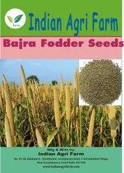 Bajra Fodder (Millet)