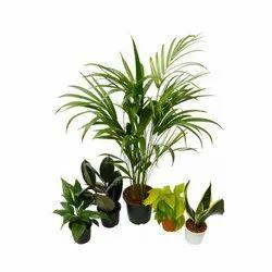 Oxygen Enriching Plant