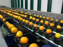 Orange Grading, Sorting and Packing Machine(Electronic)