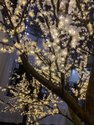 Green, Purple, Cold White Color LED Tree Start 8 feet