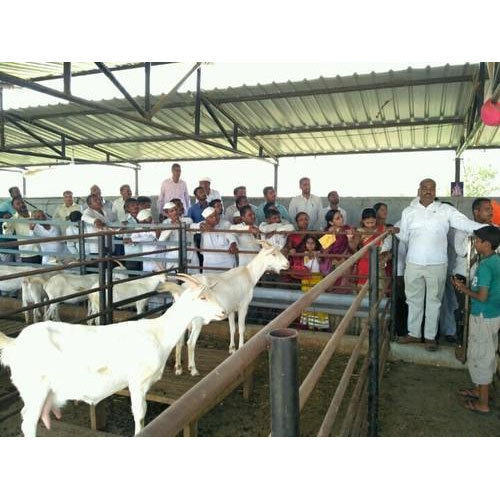 Goat Farming Training Service in Pune, Shirur by Aai Goat