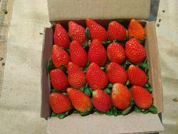 A Grade Strawberry, Packaging Type: Carton, Packaging Size: 5 Kg