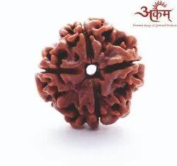 ARKAM Four Mukhi Rudraksha Nepali