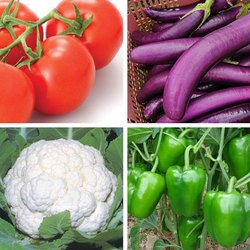 Natural Hybrid Vegetable Seeds, For Agriculture