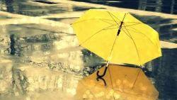 Season Umbrella