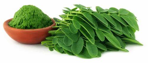 R R AGRO FOODS Organic Moringa Leaf Powder, Rs 555 /kilogram RR Agro Foods    ID: 14866317855