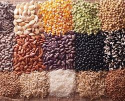 Indian Grain, Organic
