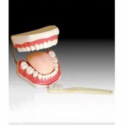 Tooth Hygiene Set-Consists of Teeth