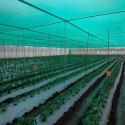 HDPE Greenhouse Nursery Net