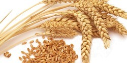 Wheat, Pack Size :5kg