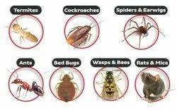 Stalwart Pest Control Services, in Navi Mumbai