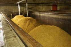 Process Dry Malt Extract Barley Malt